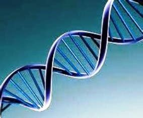 supplementary question papers question paper 2069 biology supplementary