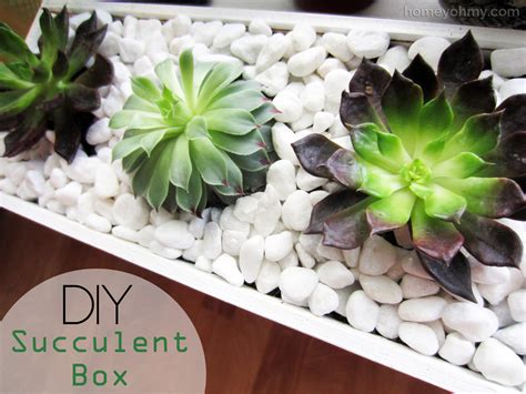 diy succulents diy succulent box homey oh my
