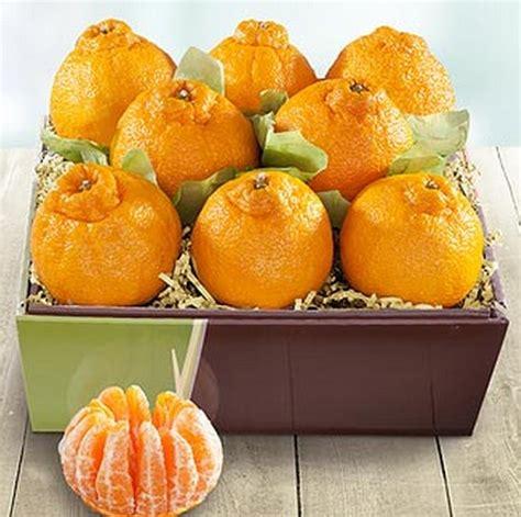 Bibit Jeruk Dekopon tanaman jeruk dekopon bibitbunga