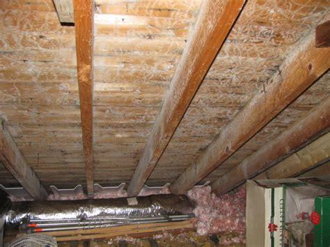 white mold in basement dangerous white mold in basement home design