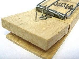 come eliminare topi in casa come eliminare i topi da casa edilnet