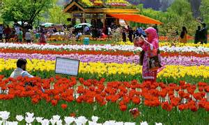 Flower Gardens In India Is This Srinagar Or Amsterdam Largest Tulip Garden In Asia Dazzles Onlookers With 1 5 Million