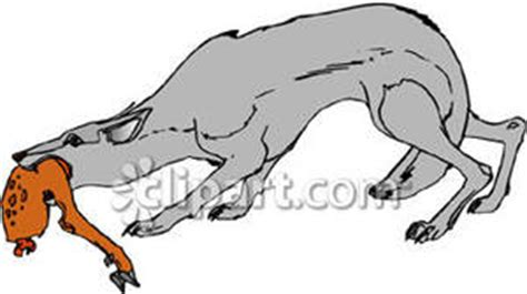chewing on leg hyena chewing on an animal leg royalty free clipart picture