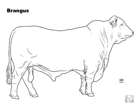 realistic cow coloring page cow cute animals coloring pages realistic cow coloring page
