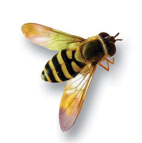 Yellow Bee magazine cliparts co