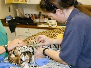 Responsibilities For A Veterinarian by Veterinary Technician S Oath Oklahoma Veterinary Technician Association