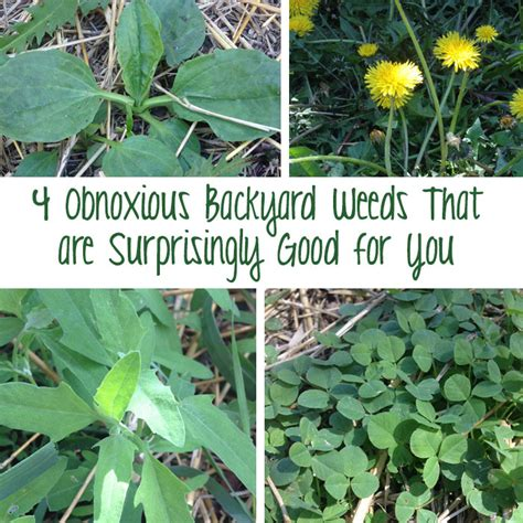 4 Obnoxious Backyard Weeds That Are Surprisingly Good For
