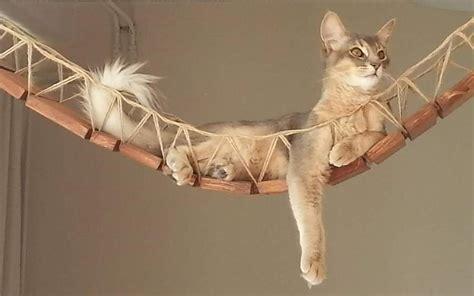 articoli  gatti economici   lusso animali pucciosi
