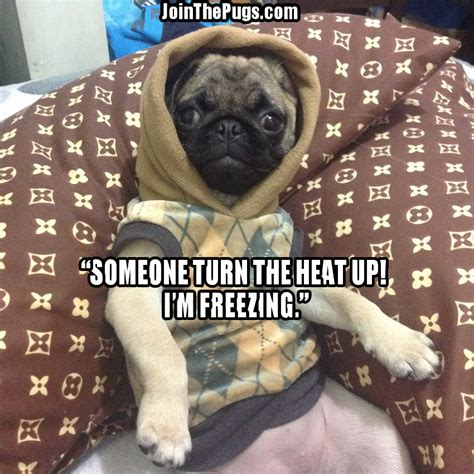 pug heat join the pugs gt turn up the heat
