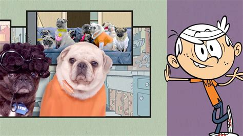 how to house a pug loud house quot the pug house quot