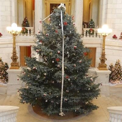 christmas trees ri golocalprov sec of state mollis to light ri state house tree