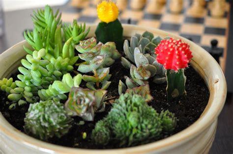 composizione di piante grasse in grande vaso piante grasse appartamento piante grasse piante grasse