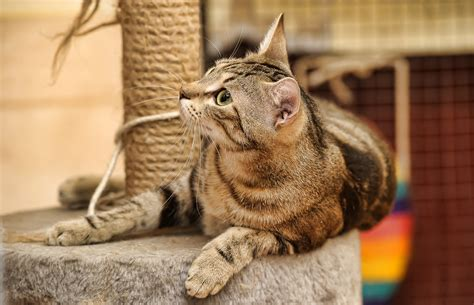 grooming tulsa tulsa pet grooming how to stop a cat from clawing furniture