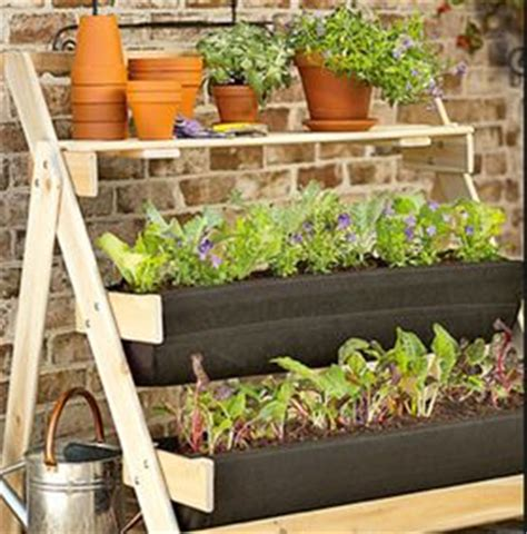 coltivare in vaso coltivare ortaggi in vaso sul terrazzo o sul davanzale