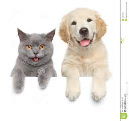 cat and white banner stock photo image 45215391