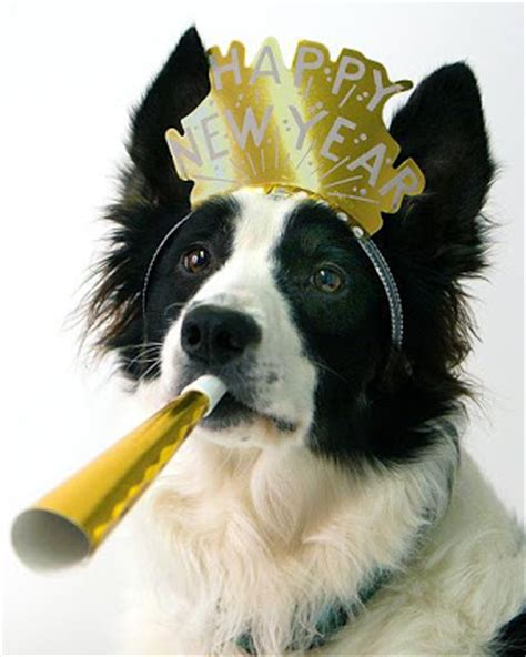 why do pomeranians cry 10 dogs who are ringing in the new year in the best way 3milliondogs