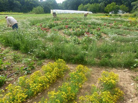 cueillette dans le jardin de formes alta 239 r plantes