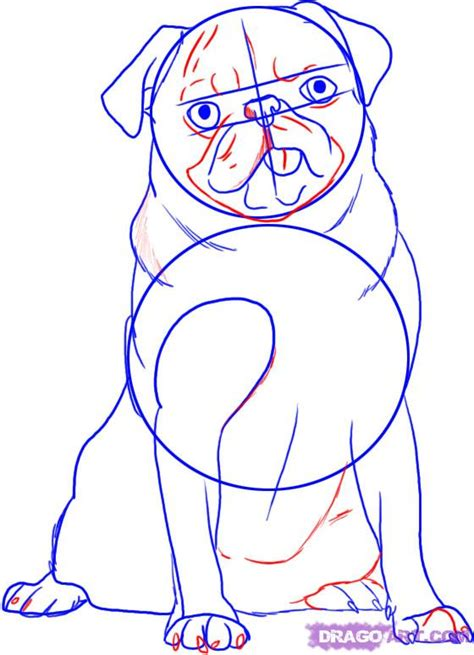 how to draw a pug puppy how to draw a pug step by step pets animals free drawing tutorial added by
