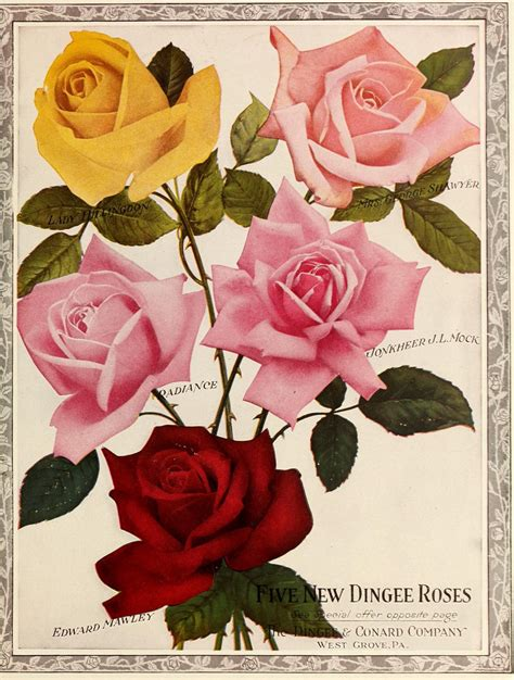 printable calendar vintage roses n20 w1150 dingee guide to rose culture west grove pa