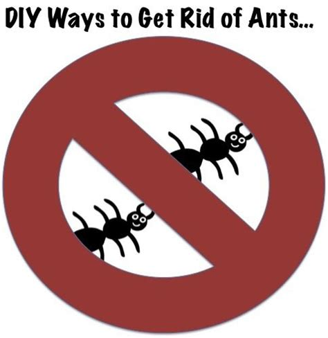 best way to get rid of ants in bathroom 1000 images about diy pest control on pinterest