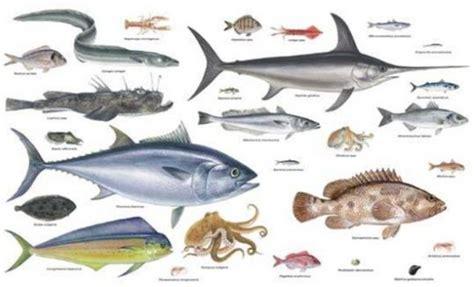 pesci da cucinare i pesci grandi rischiano di estinguersi pi 249 facilmente di