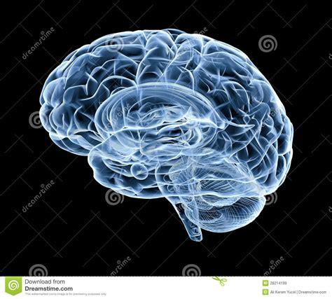 imagenes libres cerebro cerebro humano bajo radiograf 237 a im 225 genes de archivo libres