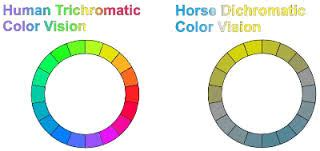 how many colors can the human eye distinguish colors el space the of l