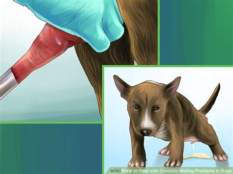 how do dogs mate 3 ways to deal with common mating problems in dogs wikihow