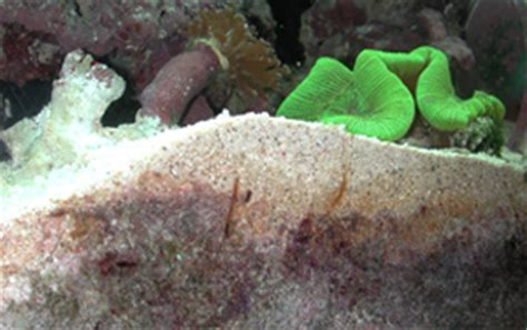 deep sand bed aquaworld aquarium article the silent killer how to use not use a gravel vacuum