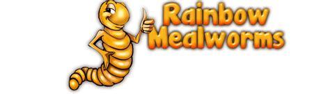 hornworms rainbow mealworms