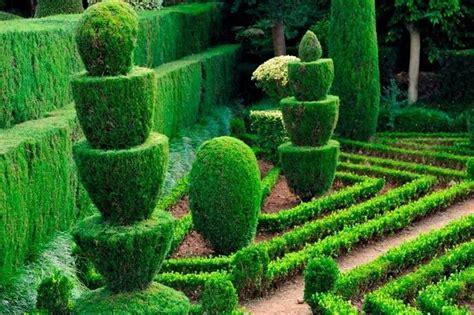 tree trimming ideen siepi da giardino sempreverdi siepi siepi giardino