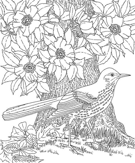 coloring templates for adults coloring page summer bird 4