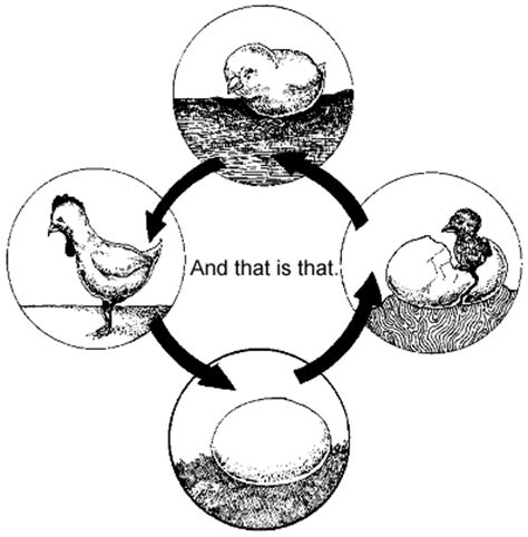 chicken life cycle coloring page life cycle of a chicken coloring page