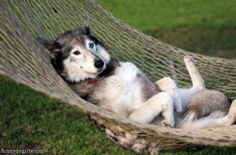 relaxing for dogs out relaxing funnydogsite