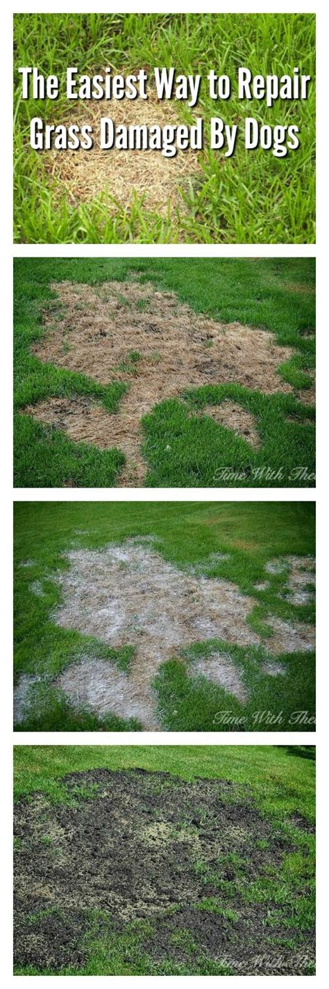 how to grow grass in backyard 1000 ideas about lawn problems on pinterest weeds in