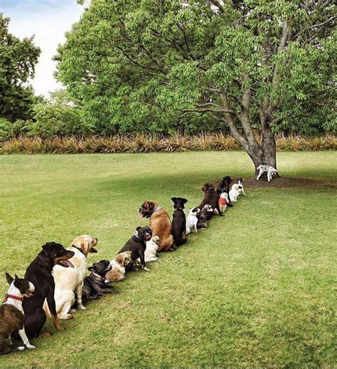 hond plast in huis na uitlaten je hond uitlaten meer dan alleen even laten plassen