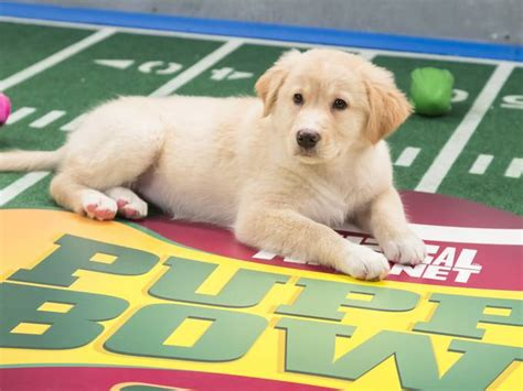 who won the puppy bowl news archives singing dogs