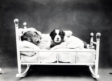 puppy bedtime puppy bedtime vintage photo free stock photo domain pictures