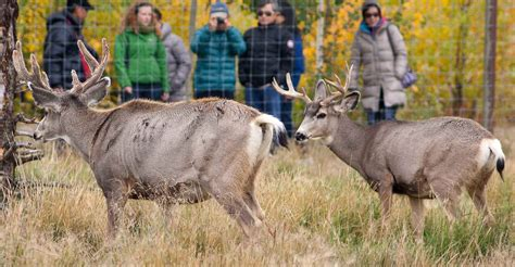 yukon wildlife preserve travel yukon yukon canada official tourism website   yukon