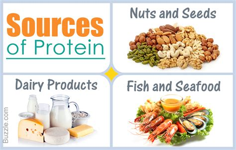 Sources Of Protein by What Are Some Sources Of Proteins For Healthy Living