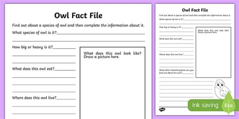 fact card template ks1 owl fact file worksheet worksheet scottish worksheet