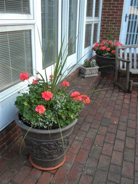 idea annual flower container photo