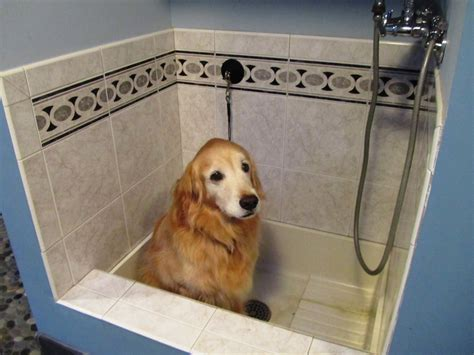 bathtub dog bathtub dogs 28 images krum veterinary hospital