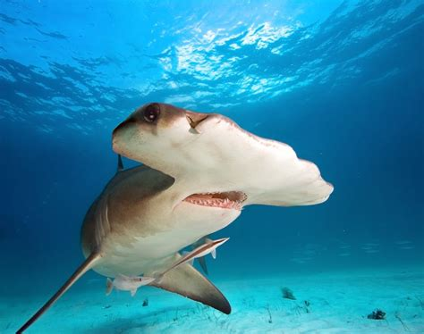 images of sharks 8 strange shark facts to sink your teeth into mnn