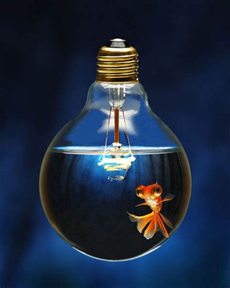 get fishy with the light bulb fish tank lightopia s