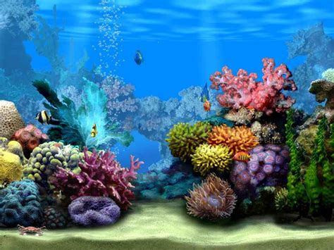 Aquascaping Supplies Ocean Floor Wallpapers Wallpaper Cave