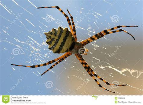 Garden Spider On Web Garden Spider Web Stock Photo Image 11385090