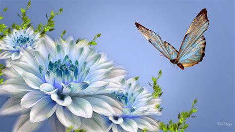 wallpaper bergerak kupu kupu get hd wallpaper wallpaper kupu kupu cantik