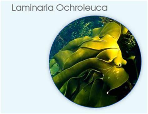 Laminaria Detox by Laminaria Ochroleuca Golden Seaweed Extract