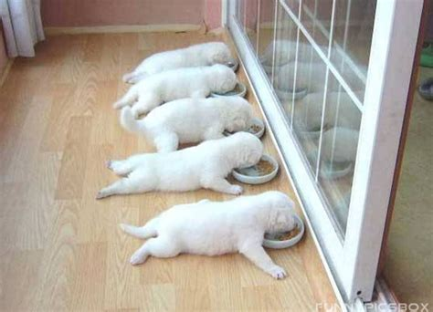 funny image funny cat  dog pictures